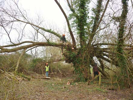 Tree Surgery in Kidderminster, Worcestershire